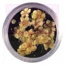 Flor real para nail art yellow